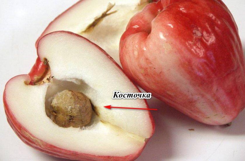 Косточка яванского яблока