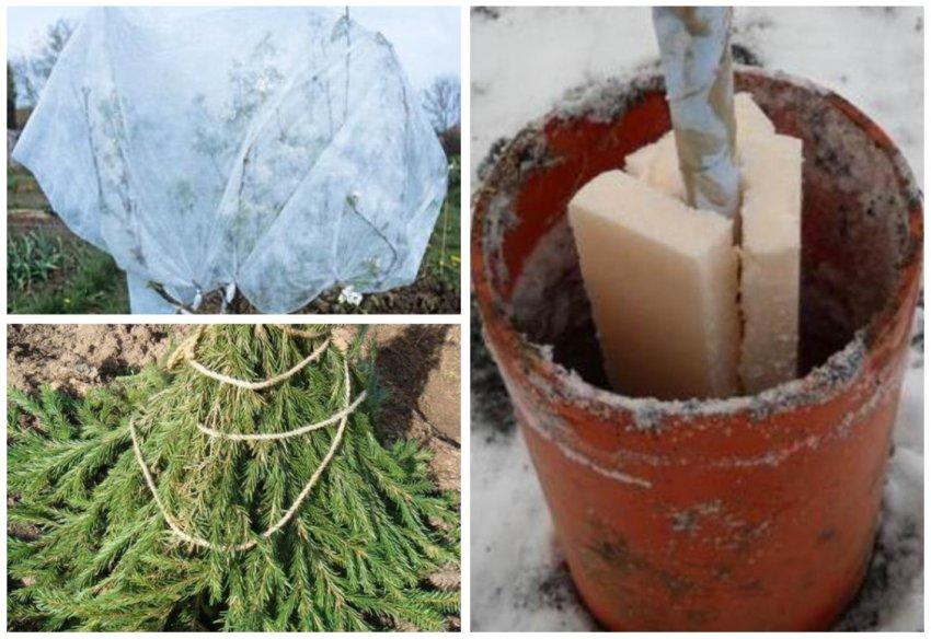 Утепление молодой яблони на зиму