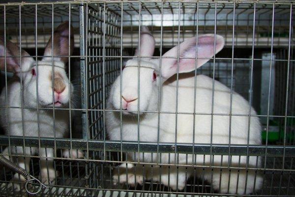 Пол в крольчатнике