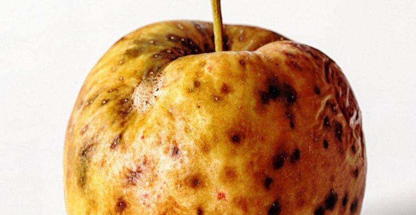 Подкожная пятнистость яблони