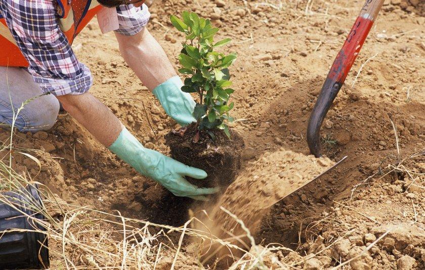 Высаживание растения