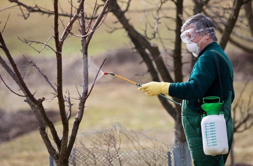 Профилактические опрыскивания деревьев