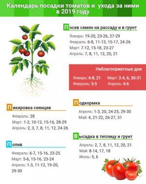 Посадка и уход за томатами