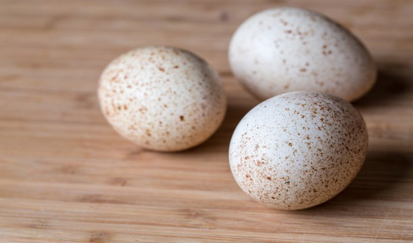 Яйца индейки