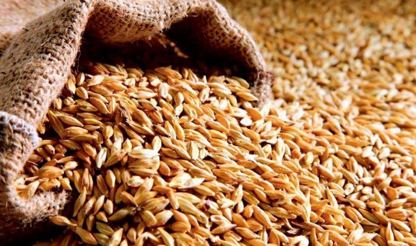 Египет отказался принимать румынскую пшеницу