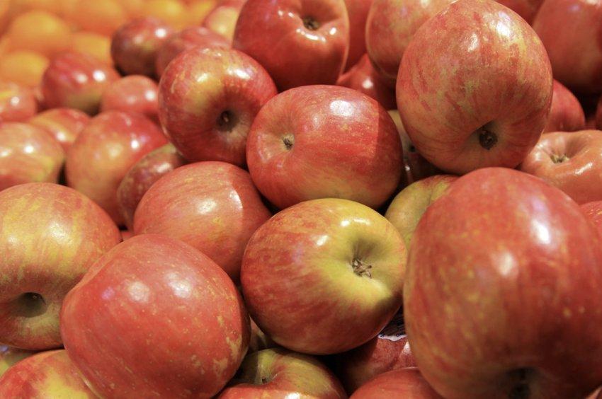 Урожай яблони Фуджи