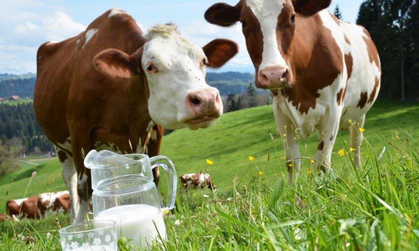 В штате Миссури за последний месяц пало двести коров