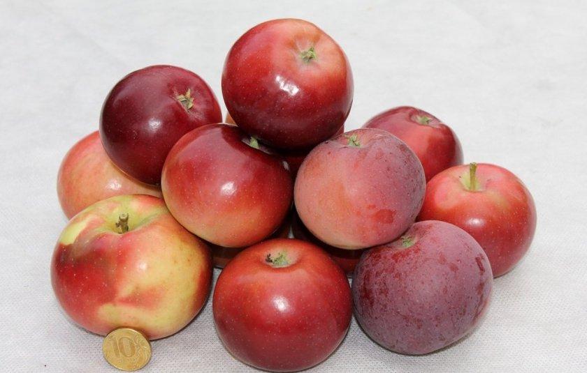 Яблоки Московское ожерелье