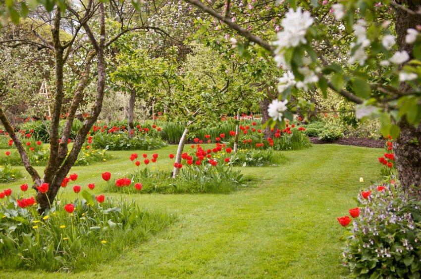 Цветы под яблонями