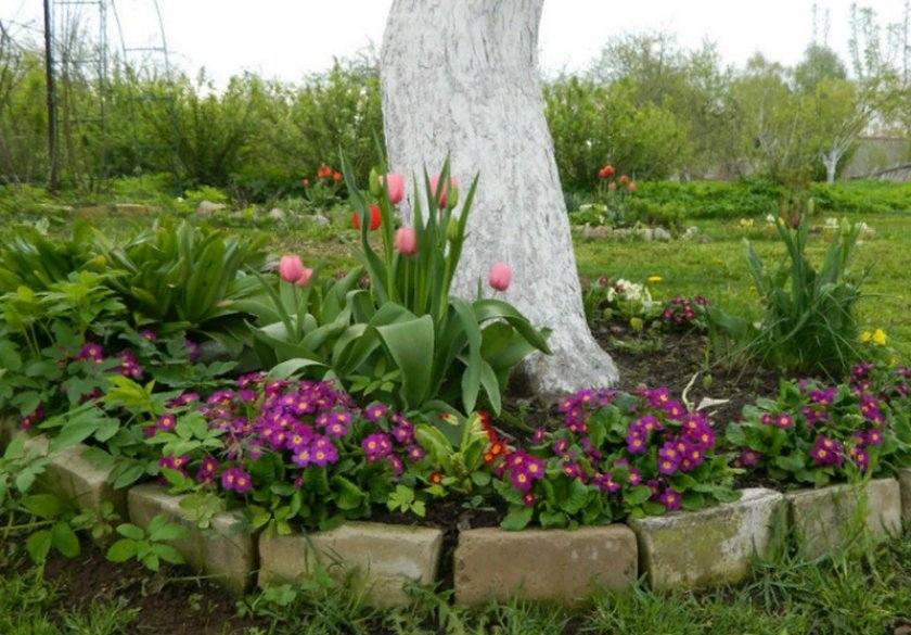 Цветы под яблоней