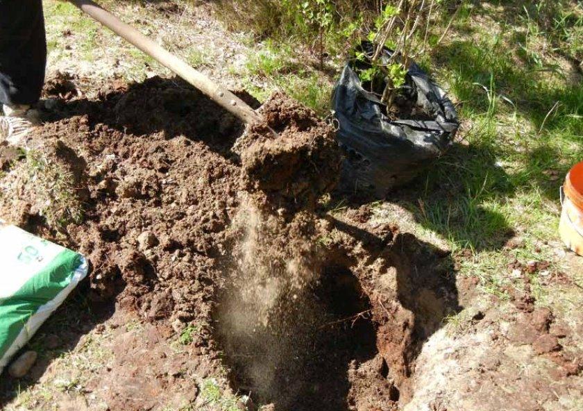 Подготовка ямы и почвы к посадке