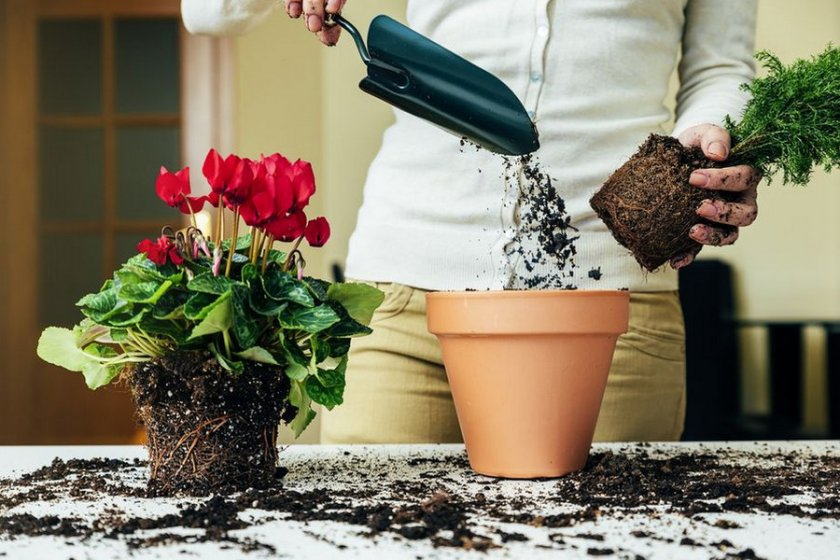 Пересадка цветочных растений