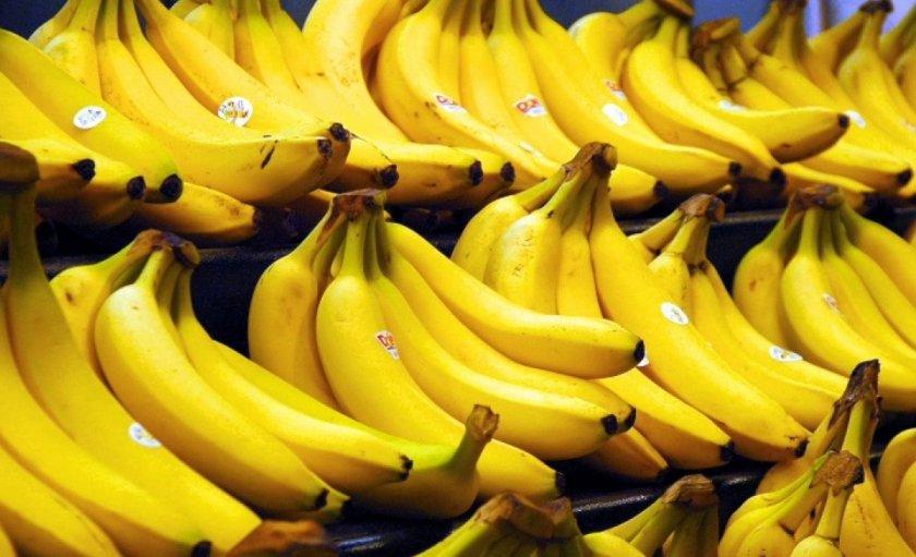 В Голландии собрали первый в истории страны урожай бананов