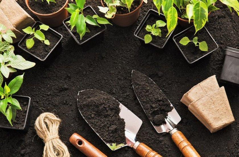 Посадка растений
