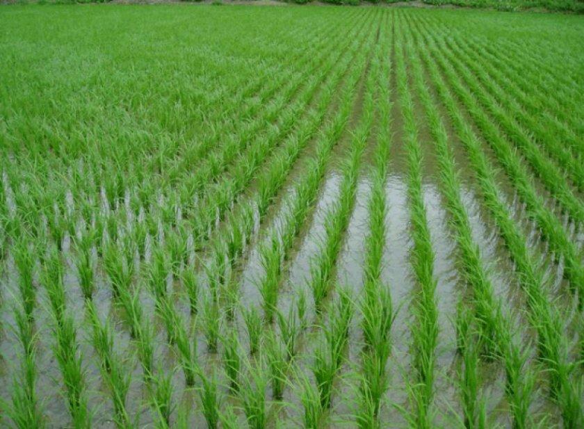 Филлипины терпят сельхозубытки от эффекта Эль-Ниньо