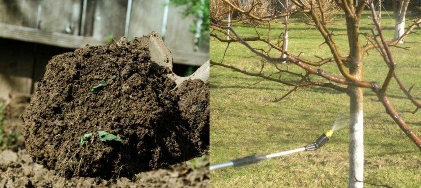 Обработка яблони от болезней и вредителей