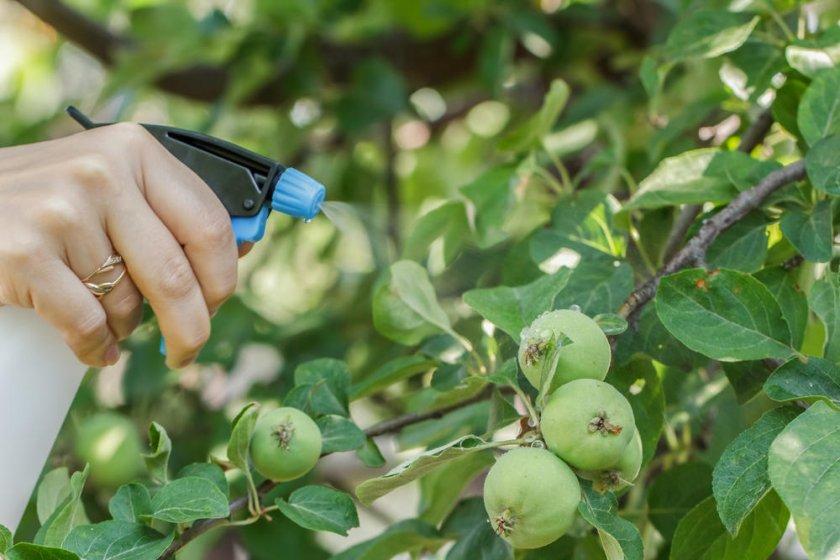 Опрыскивание яблони от вреди
