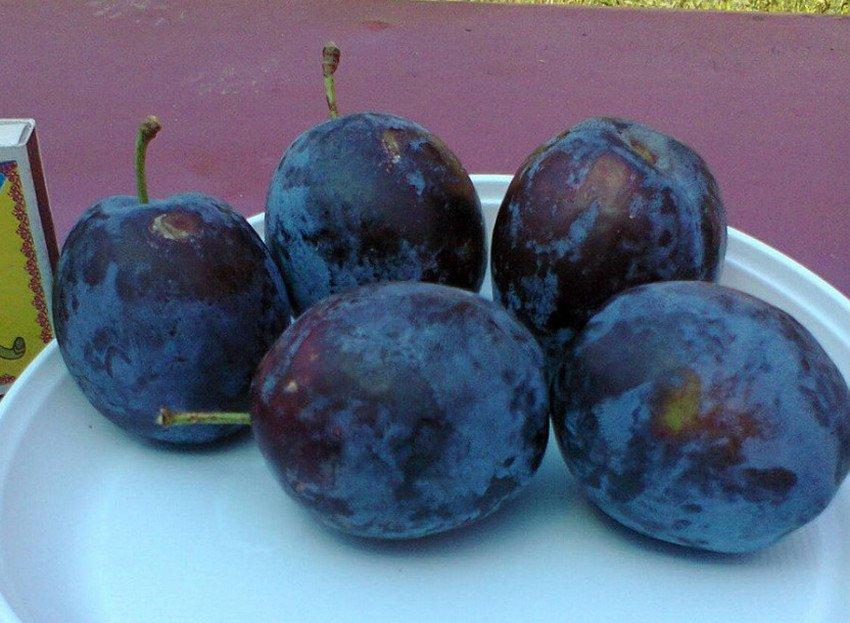 Плоды сливы Ненька