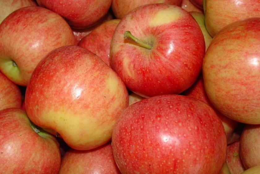 Яблоки Гала