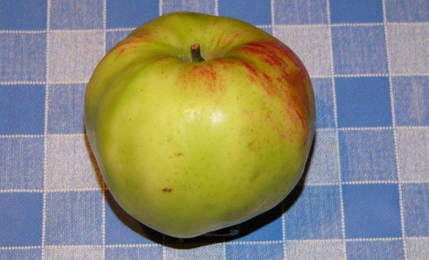 Яблоня витязь фото описание