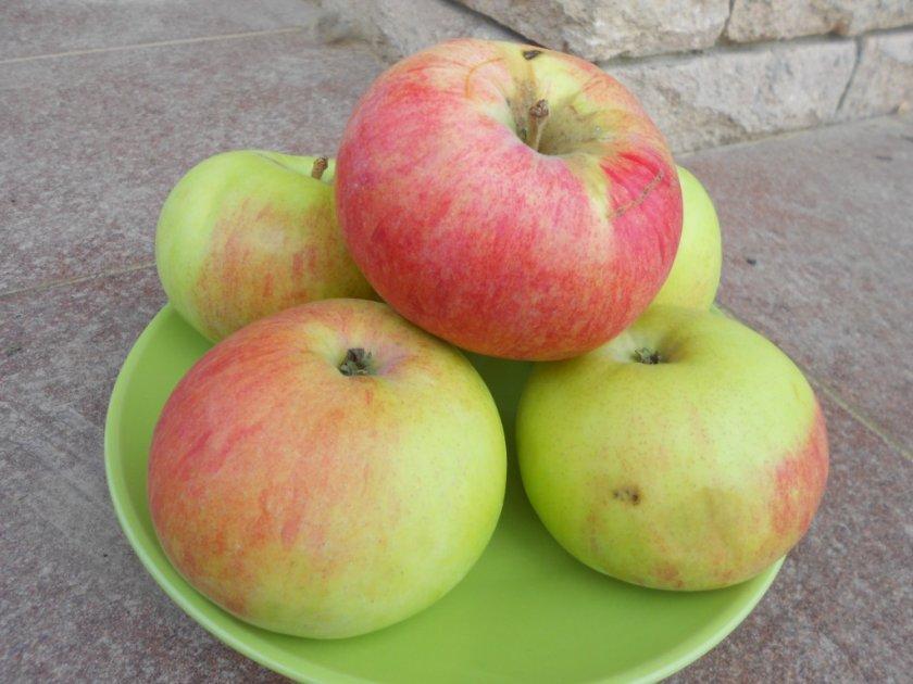 Яблоки Марат Бусурин