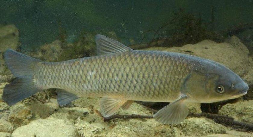 Житомирское водохранилище пополнилось 2 тоннами рыбы