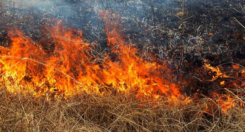 Закарпатье пылает: граждане продолжают сжигать сухостой