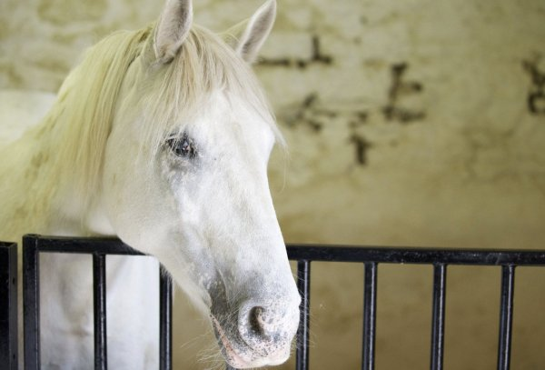 Как можно назвать лошадь (девочку, мальчика): правильные имена, клички