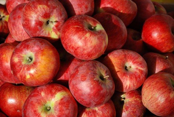 Алматинский сорт яблок