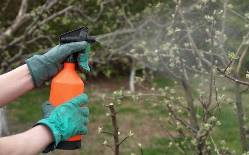 Весенняя обработка яблони