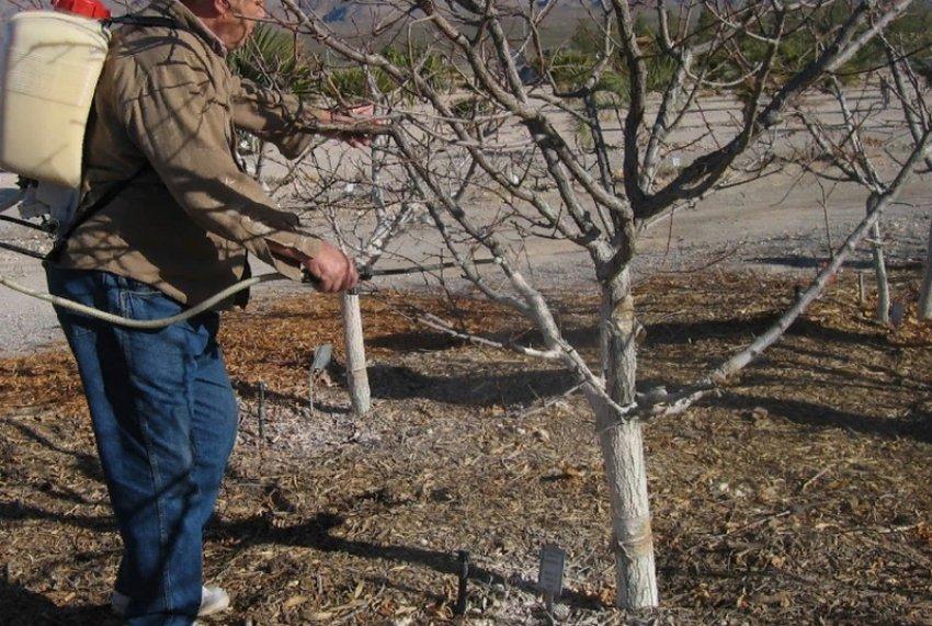 Профилактическая обработка яблони
