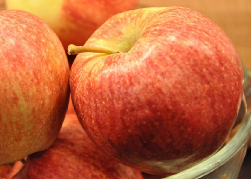 Яблоки сорта Камео