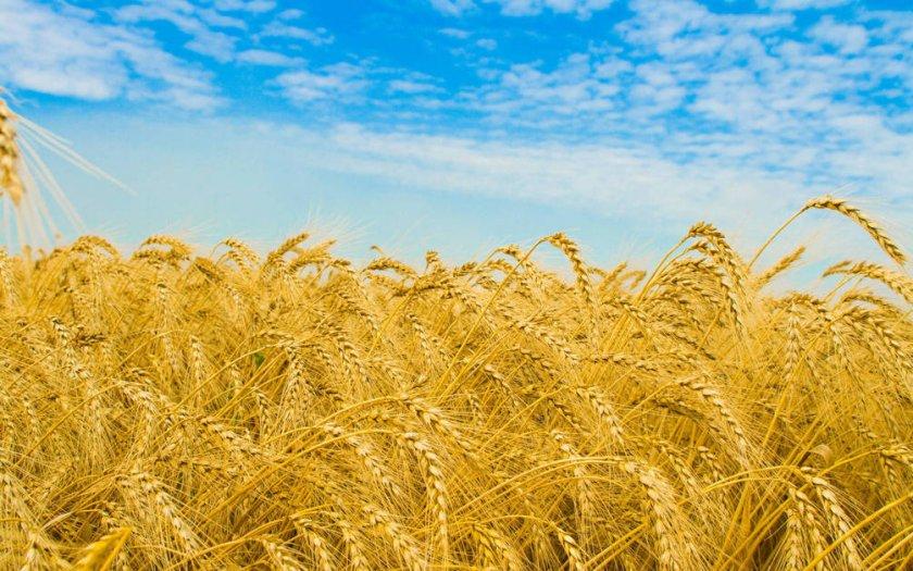 Американо-Бразильские переговоры по сельском хозяйству
