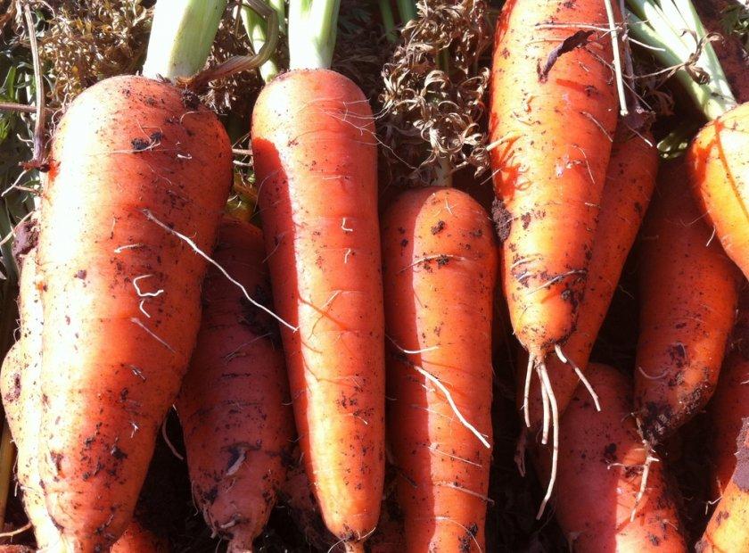 Морковь Кордоба f1