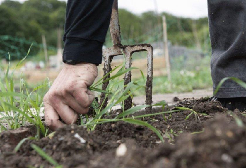 Подготовка почвы для посадки моркови