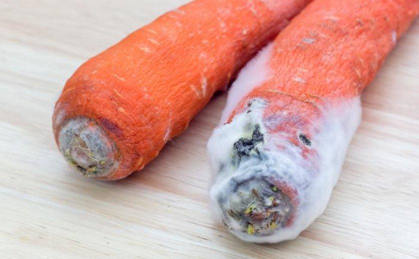 Белая гниль на плодах моркови
