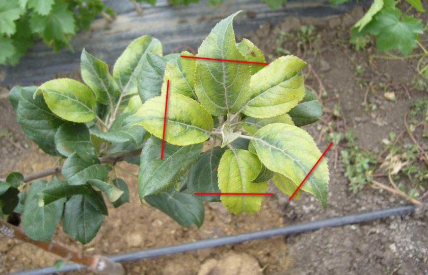 Укорачивание листовой пластины