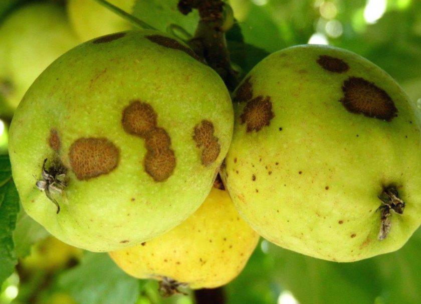 Яблоки с банановым вкусом
