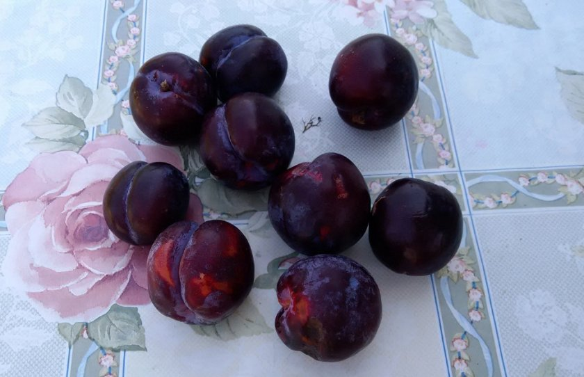 Плоды сливы Маньчжурская красавица