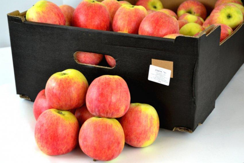 Урожай яблонь Пирос