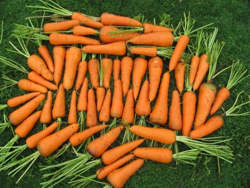 морковь фото в хорошем качестве крупным планом автовладельцев