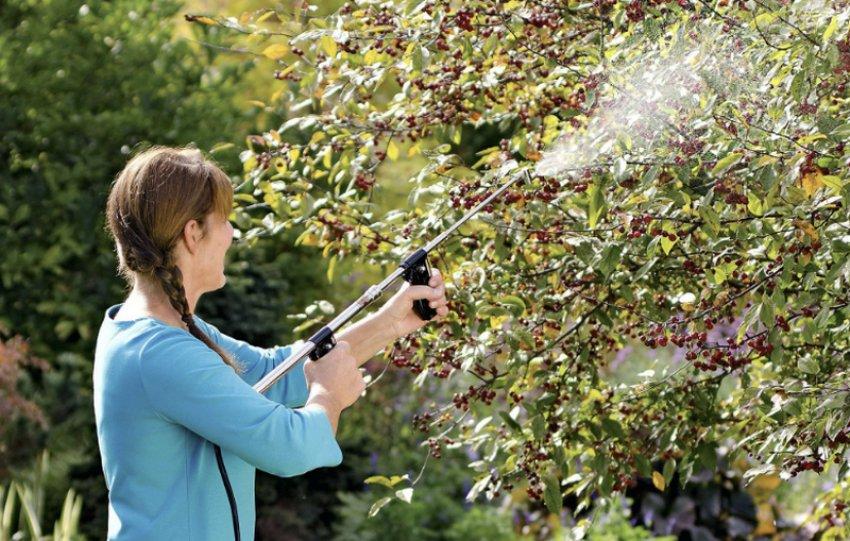 Обработка вишни биологическими препаратами