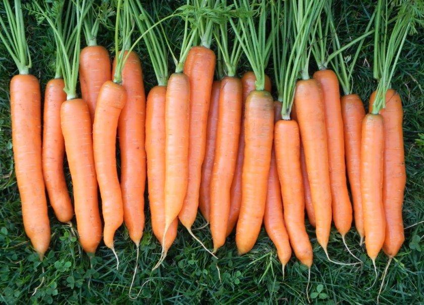 Морковь сорта Витаминная