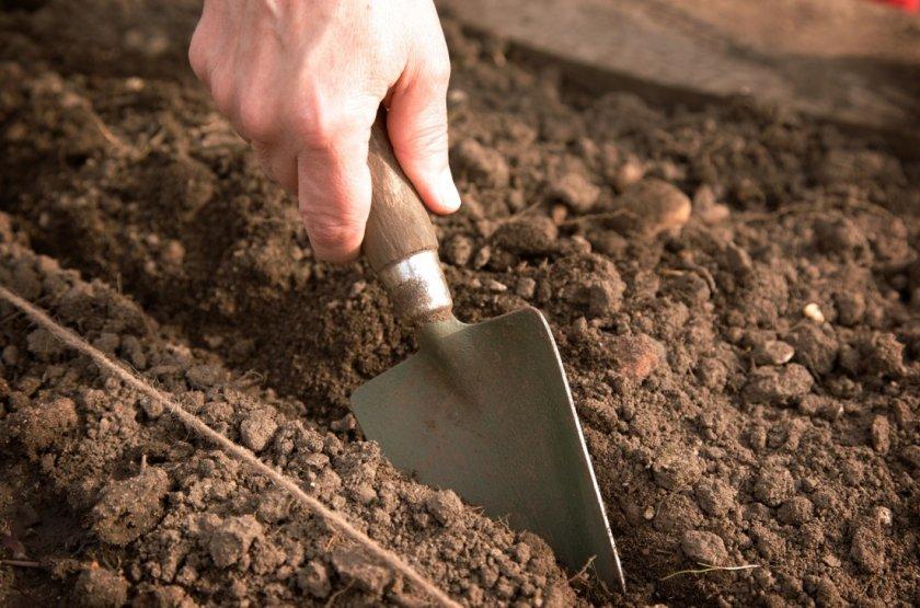Подготовка посадочной грядки для посева моркови