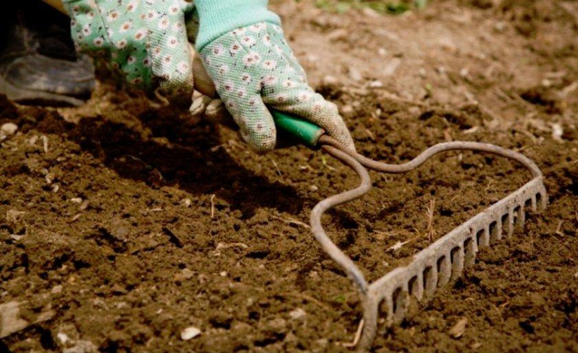 Подготовка почвы для посадки