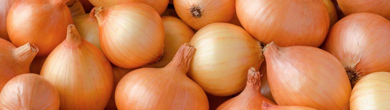 Особенности выращивания сорта лука Сеттон