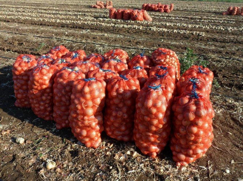 Урожайность лука сорта Сеттон