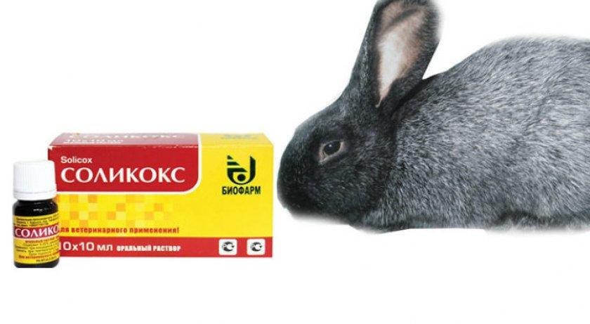 Препарат «Соликокс»