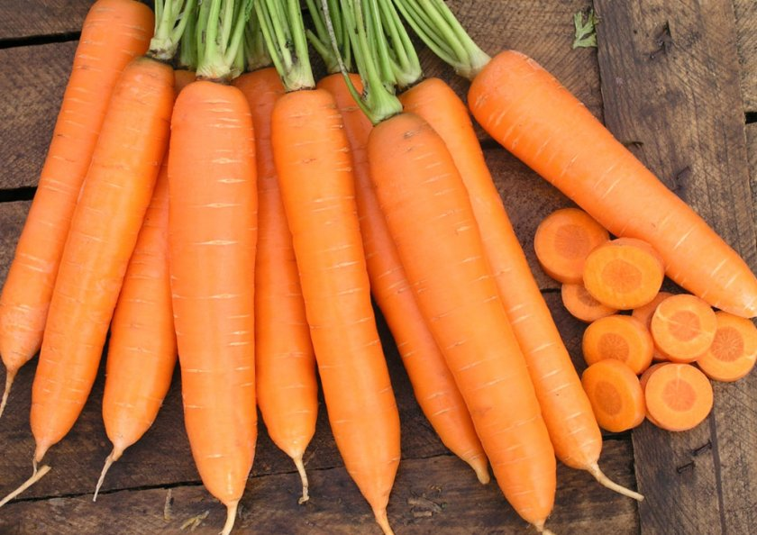 Преимущества моркови Санькина любовь