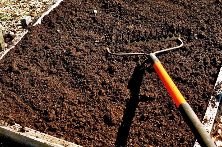 Подготовка почвы перед посадкой моркови